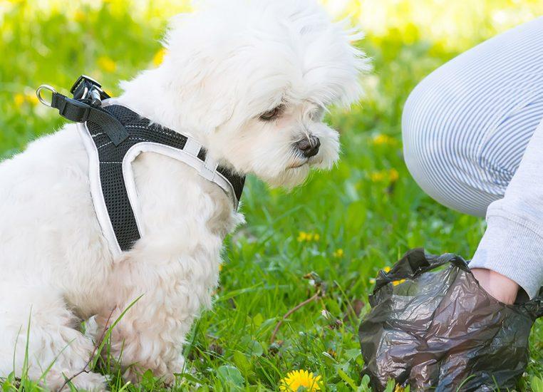 dog-with-dog-bag