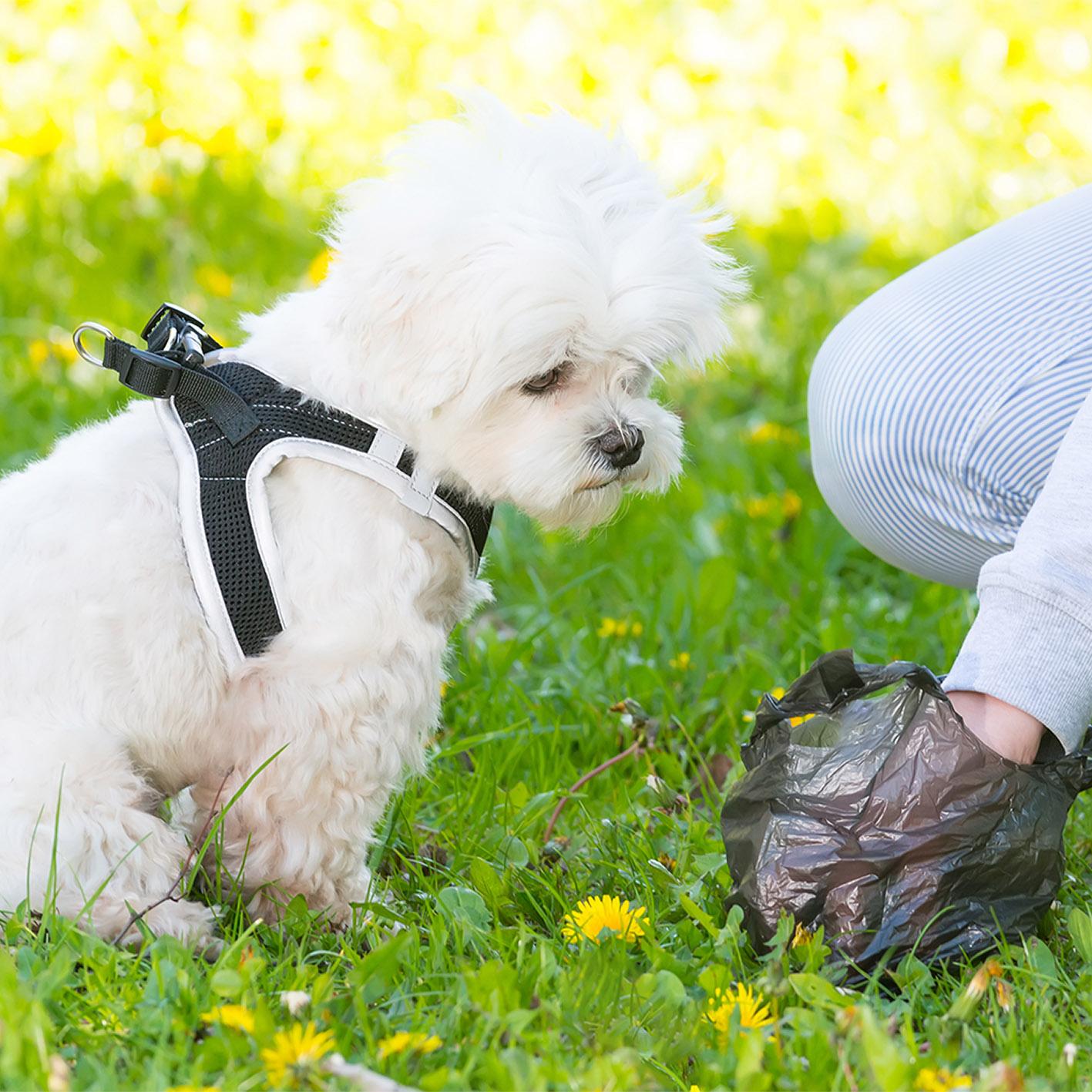 biobag-miljvennlige-hundeposer